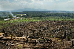 07-29-2015Borneo_Sumatra